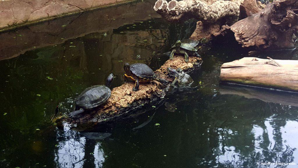 lagos_zoo