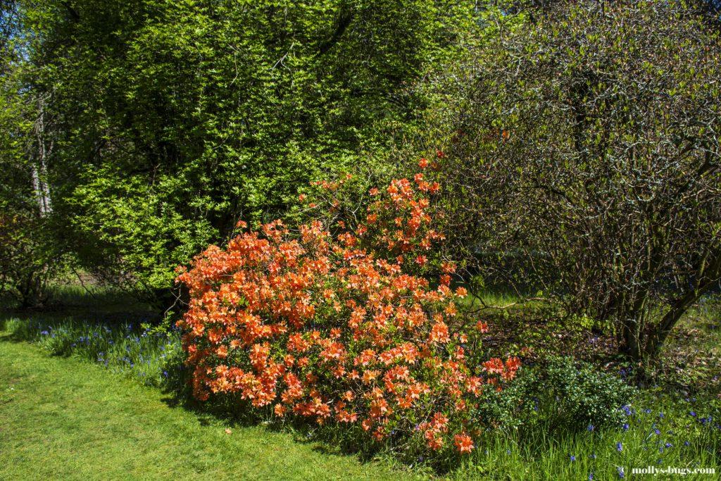 mount-usher-gardens-2