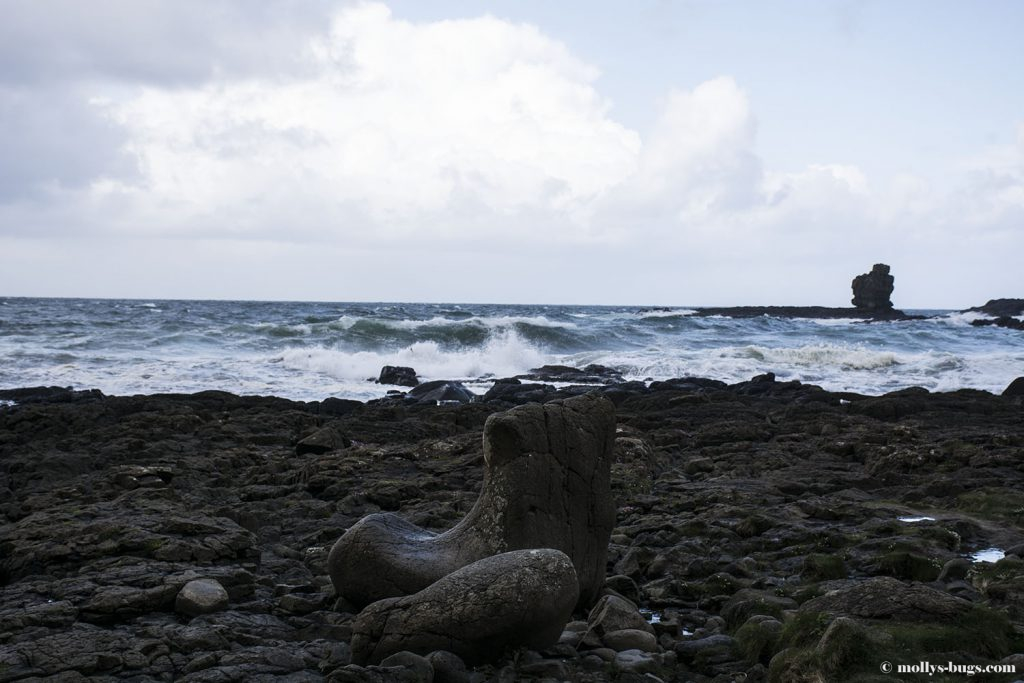 Giant's_causeway_10