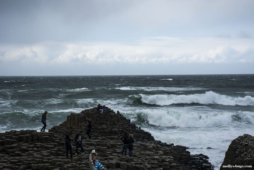 Giant's_causeway_11