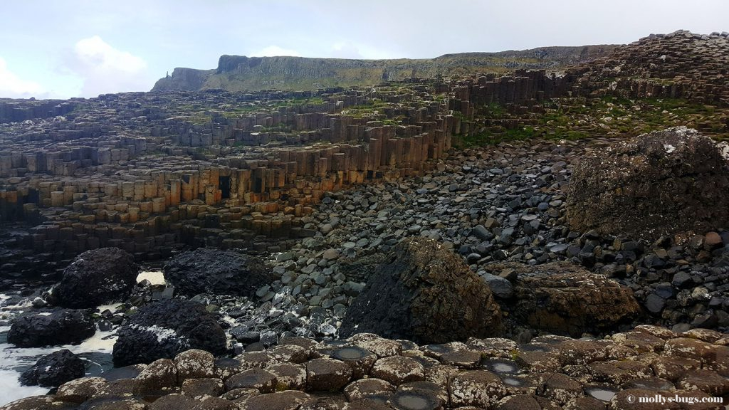 Giant's_causeway_15