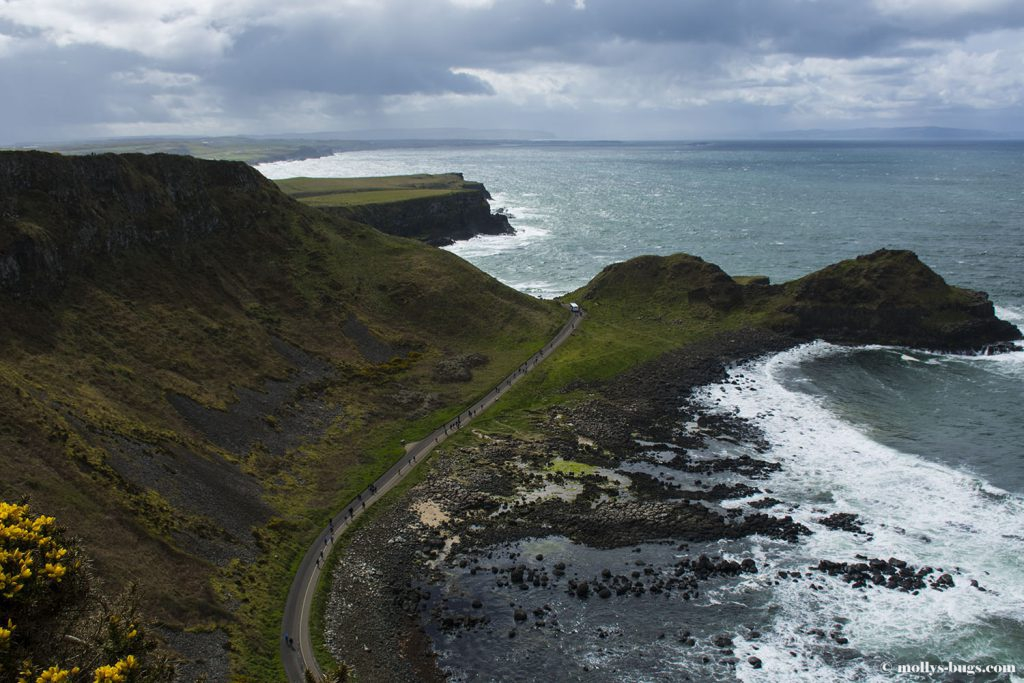 Giant's_causeway_3