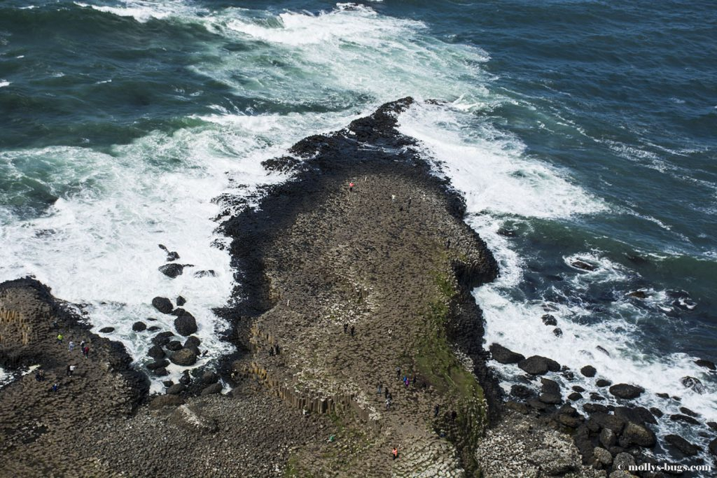 Giant's_causeway_4