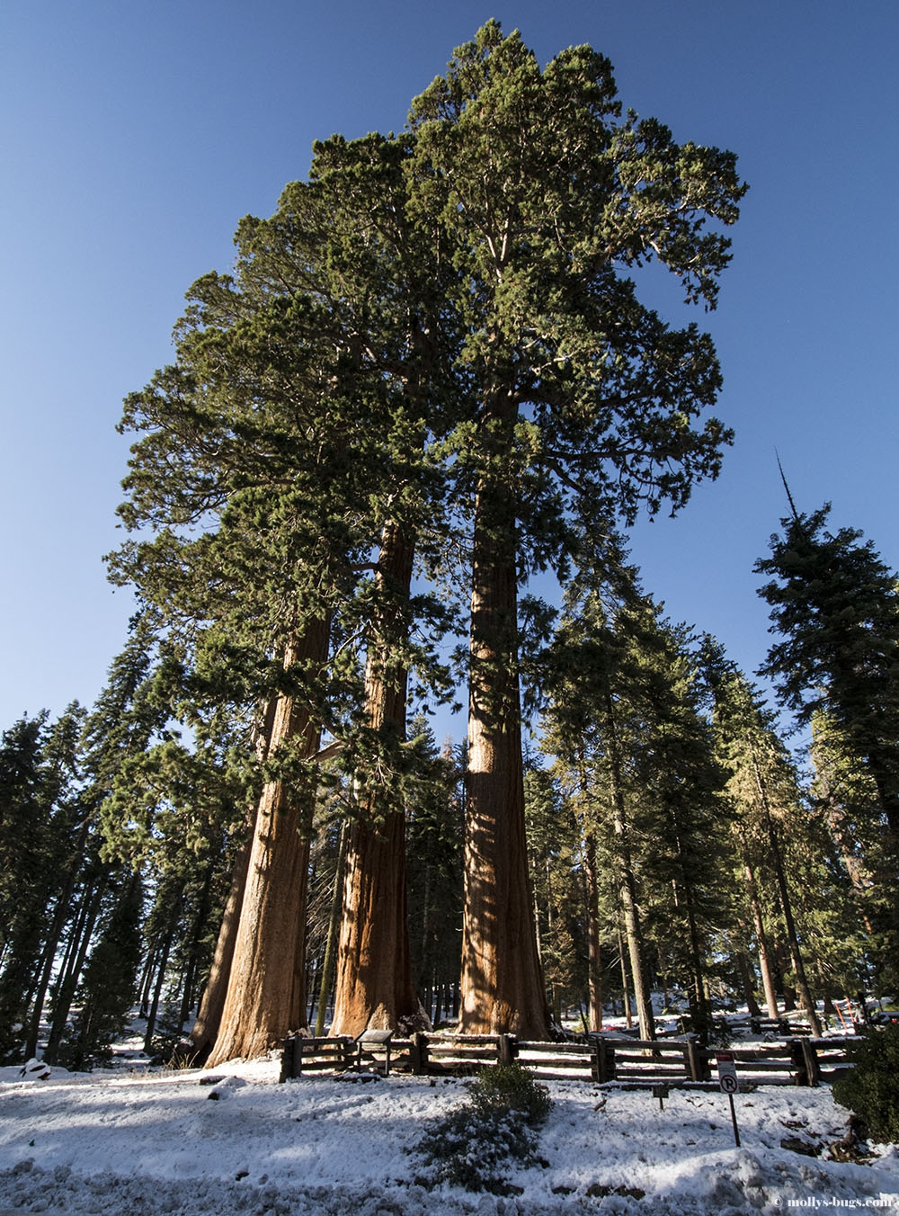 Sequoia National Park California Molly S Bugs