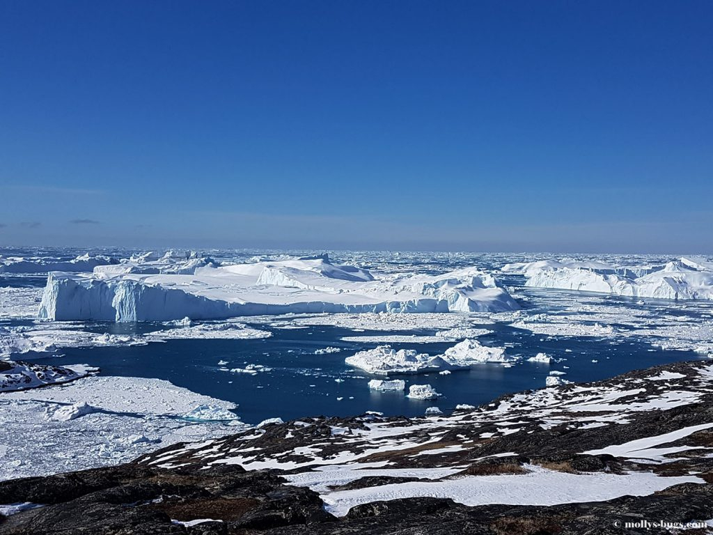 How to survive the harsh winter: life hacks from the inhabitants of Greenland