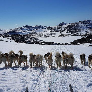 Dogsled Trip. Greenland