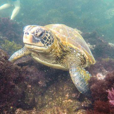 Эквадор. Галапагосские острова. На какие экскурсии ехать?