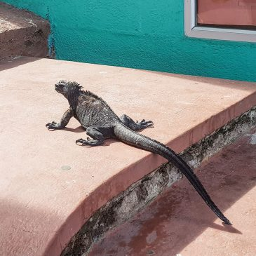 Life on the Galápagos Islands