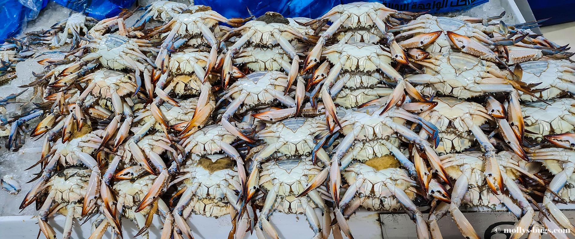 crabs-1.jpg