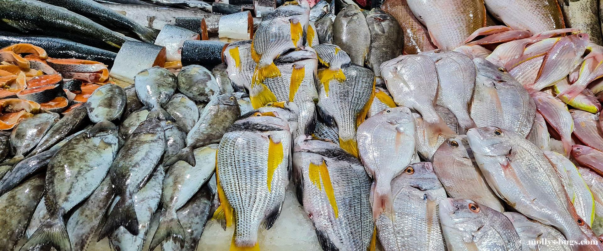 dubai-fish-market-1.jpg